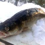 Kalastuslain muuttaminen on estettävä