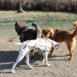 Koirapuistoaloite hylättiin toistamiseen Vesilahdessa