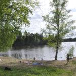 Runsaasti sinilevää Vesilahden kirkonkylän rannassa