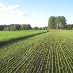 Valtiolle myynti on edullista myyjälle: Säijän ja lähiympäristön peltojen tilusjärjestelyistä kysellään