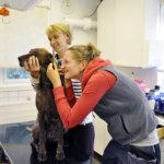 Reija Junkkari kurkkaa Emmin korvaan Jaana Romun varmistaessa, että koiran pää pysyy paikoillaan. Kaksi eläinlääkäriä mahdollistaa pieneläinten hoidon Vesilahden eläinlääkäriasemalla entistä joustavammin.