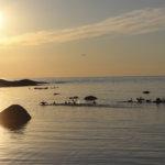 Kesäinen auringonlasku Kylmäpihlajan majakalla. Kuva: Ella Höyssä