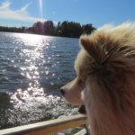 Veikko vesillä Kuva: Sanna Rannikko