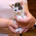 L-VS auttaa kodittomia eläimiä ruokakeräyksellä