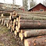 Vesilahti myi puustoa kolmelta palstalta