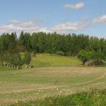 Koko Hiidennokka oli vielä sata vuotta sitten puutonta lammaslaidunta. Alueen umpeenkasvu on estetty niittämällä sekä vesakoita ja nuorta puustoa raivaamalla. Kuva: Arto Hämäläinen