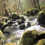 Keväisin pärskettä riittää Huhkamonkolun purossa. Välillä vedet katoavat kulkijalta näkymättömiin suurten kivipaasien lomaan. Kuva: Arto Hämäläinen