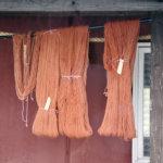Värjätyt langat kuivataan ilmavasti. Nämä langat muotoutuvat tulevaisuudessa ehkä unisukiksi tai villatakiksi.