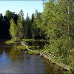 """Kuva on otettu toukokuun lopulla, jolloin luonto alkaa heräämään ja kevät on vaihtunut kesäksi. Puut ja pensaat tarjoavat vihreyttä talven mustavalkoisuuden jälkeen. """"Silta Saareen"""" kuvaa erästä Lempäälän elinvoimaisuutta, matkailua ja alueen tarjoamaa virkistystä ja sen mahdollisuuksia. Myös Lempäälän keskusta on saari, joten """"Silta Saareen"""" on myös viite siihen.  Kuva: Kari Saarinen"""