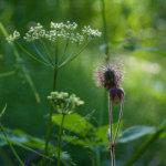 Vastavalon kukat Kuva: Lasse Virtanen