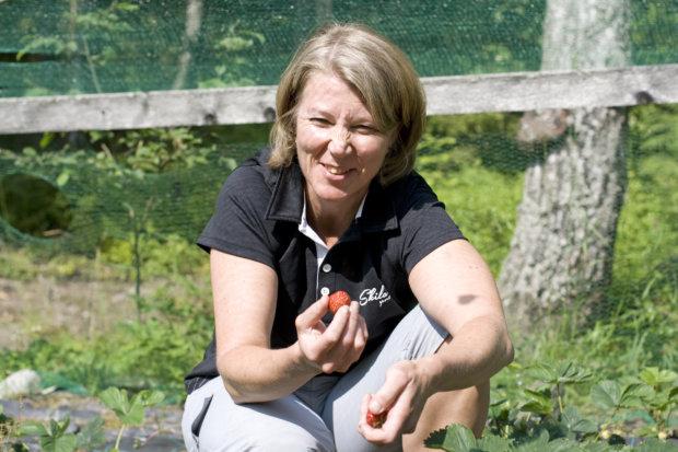 Mansikkamaan hoito on Tanja Jääskeläiselle mieluisaa puuhaa. Kuva: Katariina Rannaste