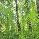 Päiväretki Vesilahden luontoon: Hinsala