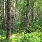 Metsien kaadossa naapurit ja luonto myös huomioon