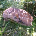 Bambi Kuva: Pentti Haapaniemi