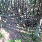 Tuhnuvuoren  aarniometsäpolku Kuva:Pekka Pohjola