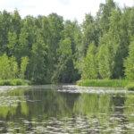 Lukijan mielipide: Vesilahti on ruotsinkielinen 'luhtaheinälahti'