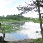 Päiväretki Vesilahden luontoon: Koskenjoen reitti
