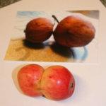 Siamilaisia omenakaksosia