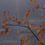 Kuura reunustaa puunlehtiä