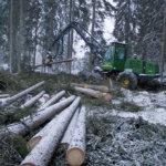 """""""Lempäälän metsänhoitosuunnitelma päivitettävä"""""""