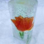 Jääkukkia maitopurkkimuotilla
