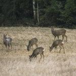 Metsästysmajalla vietetään perhepäivää