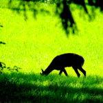 Vihreät niityt Kuva: Tapio Sarpola
