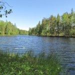 Mälitty ei ole enää erämaajärvi. Oikealla häämöttää suuri hakkuuaukea ja hakkuut lähestyvät järveä myös toisesta suunasta. Uudehko metsäautotie pohjoisesta ulottuu melkein rantaan saakka. Kuva: Arto Hämäläinen