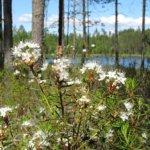 Päiväretki Vesilahden luontoon: Mälittyjärvien alue