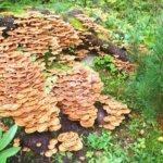 Sientä sienen perään