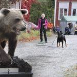 Vietit ottavat vallan karhun tullessa vastaan