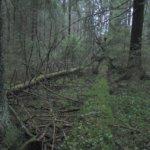 Pirkanmaalla uusia METSO-suojelualueita 435 hehtaaria