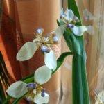 Keväiset kukkaterveiset