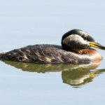 """Vesilahden """"Merikotkat"""" havaitsi 48 eri lintulajia"""