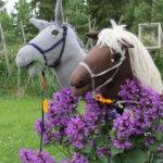 Ratsut laitumella Kuva: Pirjo Hasari