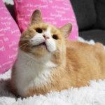 Anne-Mari on Anteron ystävä – Varovaisen arvion mukaan 20 000 kissaa hylätään Suomessa vuosittain