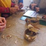 Isommat näpsäläiset opettivat Taitokeskuksella pienempiä tekemään tuohisormuksia. Kuva: Piia Kylliäinen