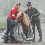Hevoset tutustuivat rekkaan nuuskimisetäisyydeltä