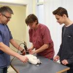 Uusi eläinlääkäri aloitti pieneläinklinikalla