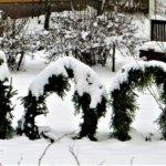 Suomi 100 puutarhassa