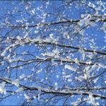 Lumipallerot