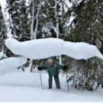 Lumiseen metsään liikkumaan