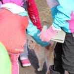 Pihamaalla käyskennellyt Matti-kissa sai runsaasti huomiota ja rapsutuksia osakseen. Kuva: Katariina Rannaste