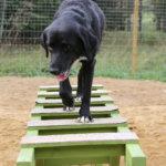 Koirien huvipuistossa saa kirmata ja kaivaa