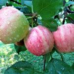 Omenoita ohikulkijoille