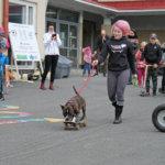 Minna Talvitien Rambo-koira viihdytti katsojia skeittaustaidoillaan. Kuva: Senja Kääriäinen