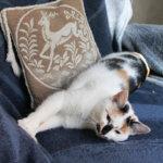 Maija Aakkulan kodissa sisustus meni pitkään lemmikkien ehdoilla. Bella, tuttavallisemmin Noksu on ainoa kissa tällä hetkellä. – Virallinen sisustuskissa, Aakkula vitsailee. Kuva: Katariina Rannaste