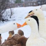 Jonna elää onnellisten lintujen parvessa