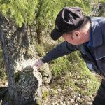Aamulenkillä ollut Antti Ujanen teki yllätyslöydön – Hakkarissa asuu suojeltu ja arka liito-orava