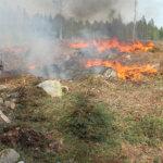 Katso kuvasarja ja video: Metsää poltettiin ihan luvan kanssa